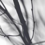 Przemysław Dakowicz: Pożegnanie w gabinecie luster
