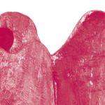 Mateusz K. Dziób: Bieszczadzkie anioły
